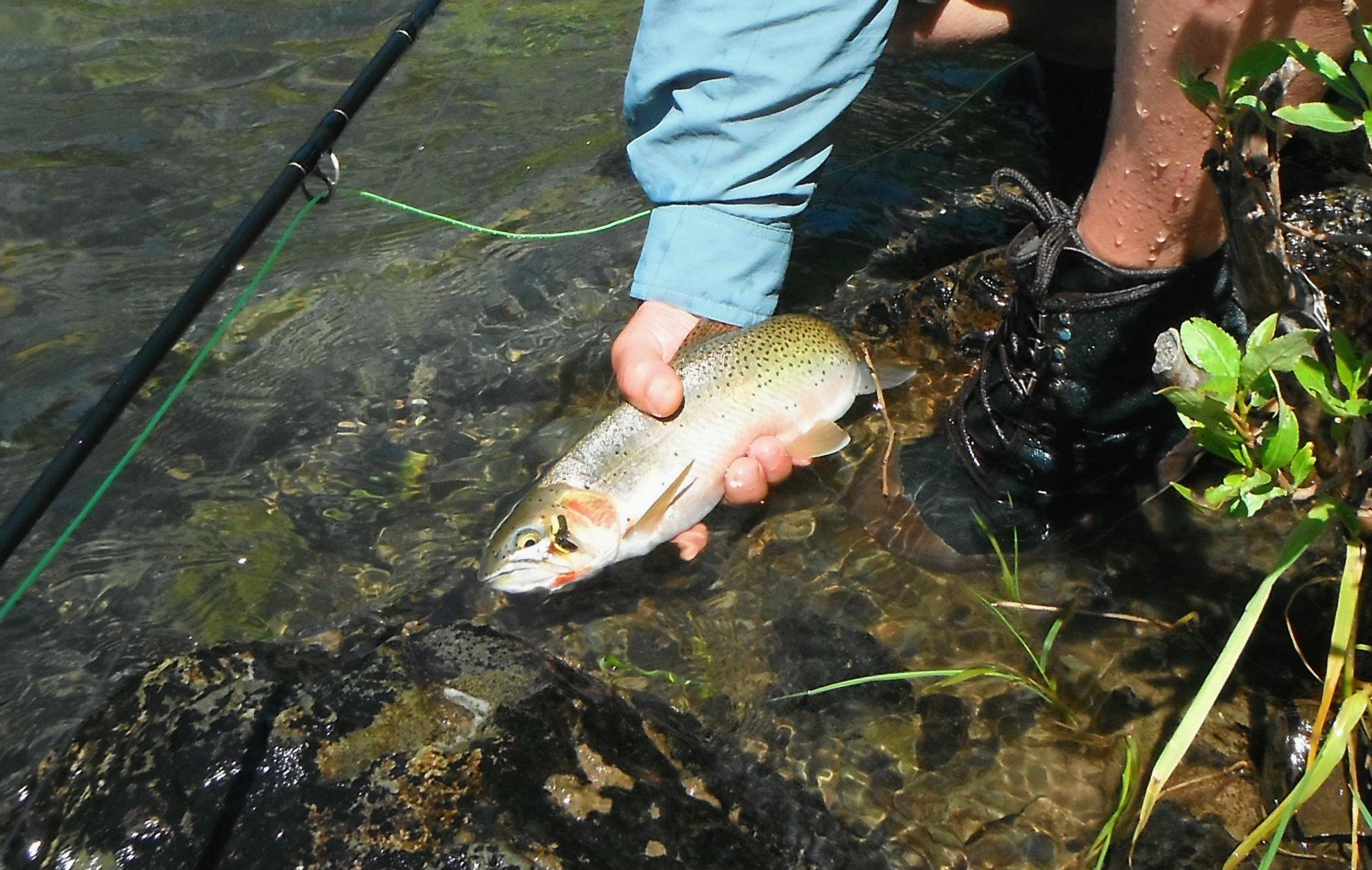 Fly fishing the twisp river methow fishing adventures for Trout fishing in washington