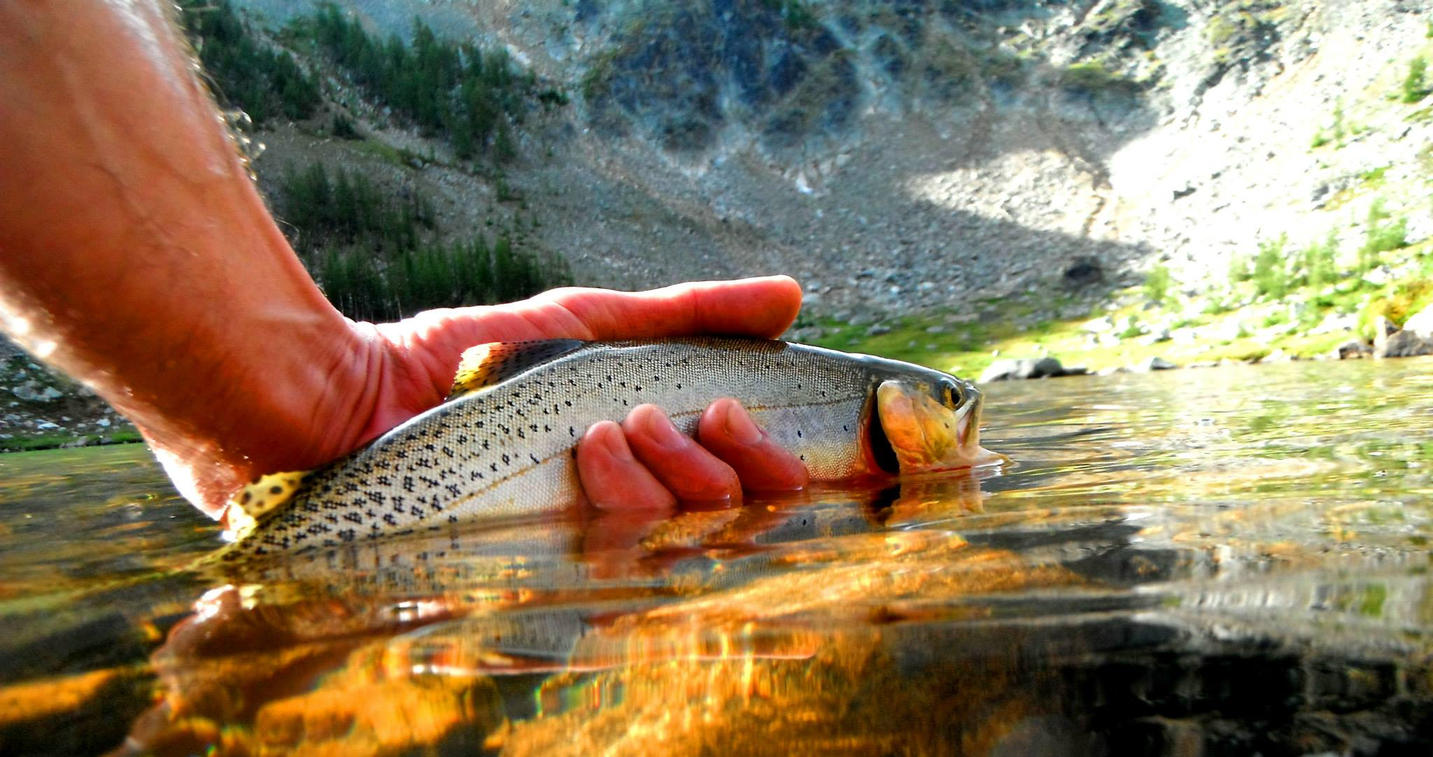 Backcountry fly fishing in the methow valley methow for Backcountry fly fishing